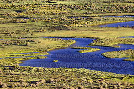 View of wetlands of Laguna Patancas near Pujzara, Cordillera de Sama Biological Reserve, Bolivia