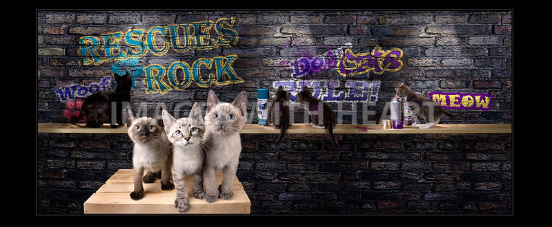 kittens spray painting graffiti on a brick wall
