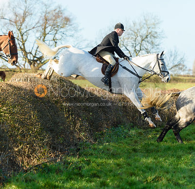 Jumping a big drop hedge.The Quorn at Barrowcliffe