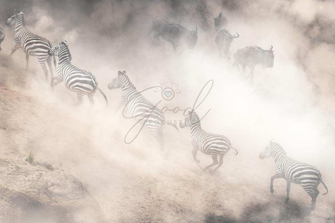 Dramatic Dusty Great Migration in Kenya