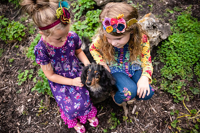 Mini Dachshund Being Pet By Girls