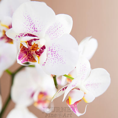 Orchid Group