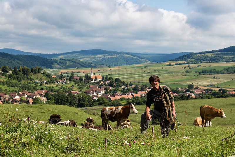 Cow Herder in a Meadow above the Town of Crit
