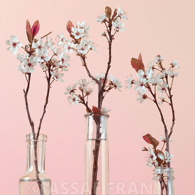 Still life of blossoms in glass vase
