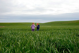 Kids in spring wheat field