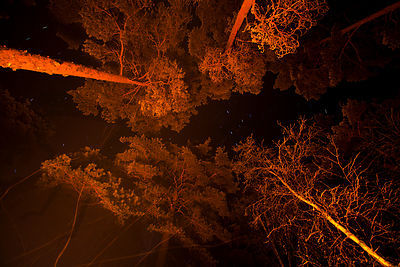 Fire paints the trees red