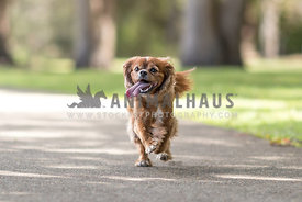 happy little pup having a run in the park