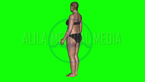 Slimming animation with 3D model on green screen