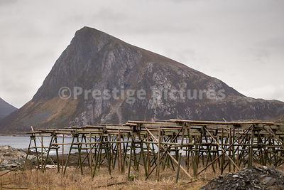 Cod drying racks producing Tørrfisk or Stockfish