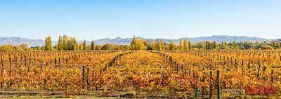 Panoramic of vineyards, Waipara, North Canterbury, New Zealand