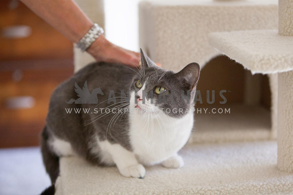owner-petting-cat-on-scratching-post