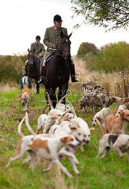 Huntsman Neil Coleman and the Cottesmore Hunt Hounds
