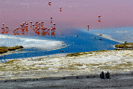 Tourists watching flock of flamingos in Laguna Colorada, Eduardo Avaroa Andean Fauna National Reserve, Bolivia