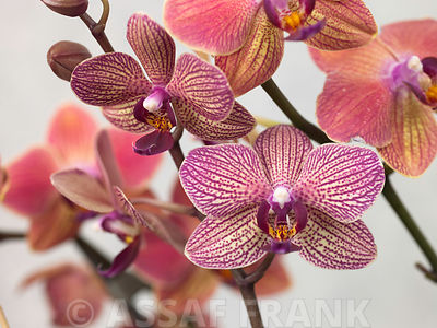 Orchids Close-up