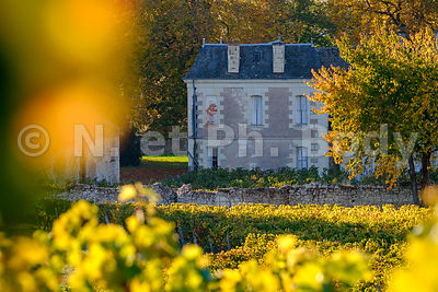 FRANCE, VIGNOBLE//FRANCE, VINEYARD