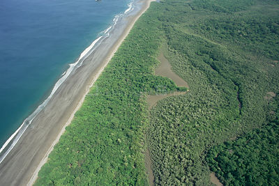 Aerial of Pacific coast tropical dry forest, Santa Rosa National Park, Costa Rica