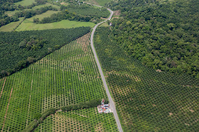 Aerial view of Palm oil (Elaeis guinensis) plantation eating into tropical rainforest, Osa Peninsula, Costa Rica