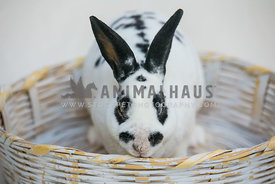 black and white bunny in a basket