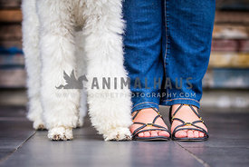 poodle paws and owners feet