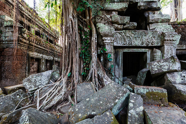 Tangle of roots of overgrowing ruins of Ta Prohm Temple, Khmer Empire. UNESCO World Heritage site