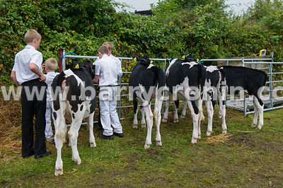 19th August, 2015.The 74th Virginia Agricultural Show, Virginia, County Cavan. Pictured is are young boys preparing animals f...
