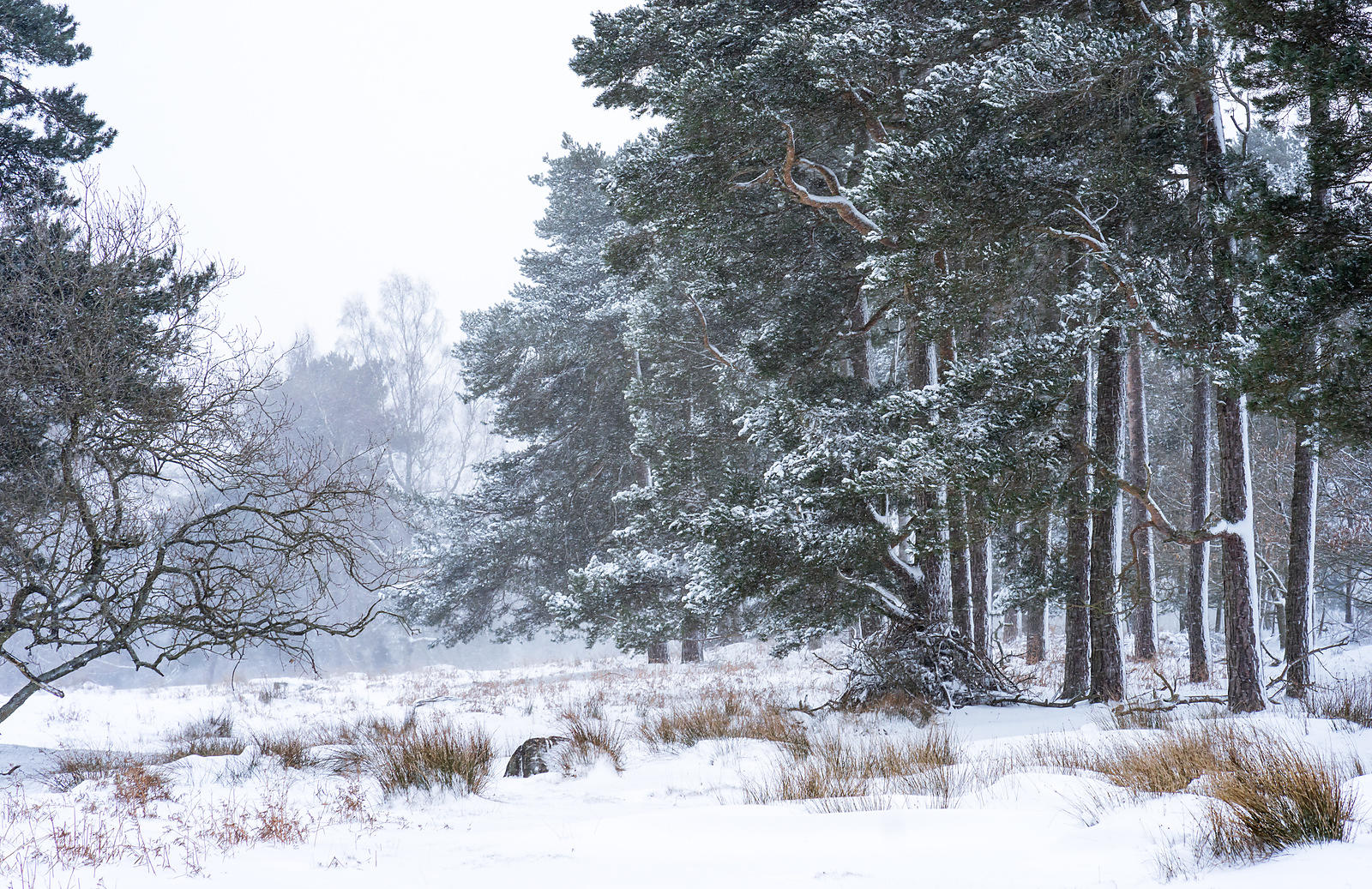 Late winter snowfall on the Longshaw Estate