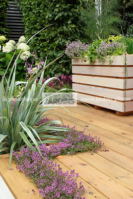 Aromatic plant, Condiment, Container, garden designer, Perennial, Terrace, Thyme, Window box, Contemporary Terrace, Digital, Silver spear