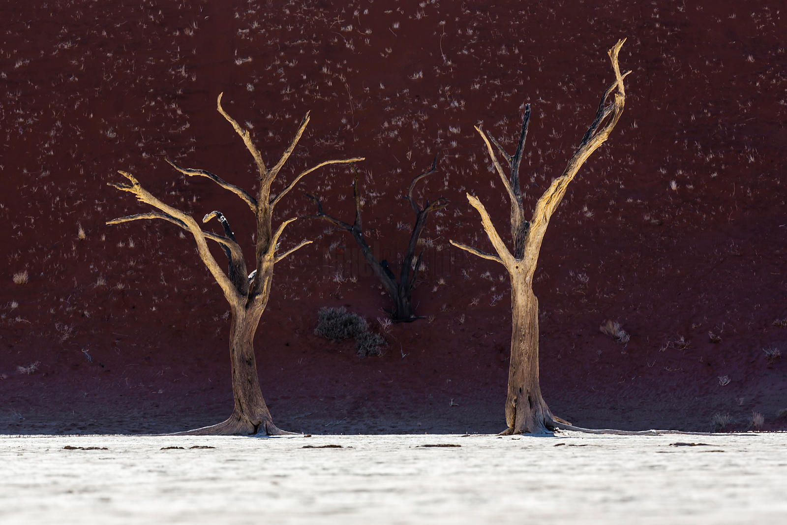 Dead Trees at Dead Vlei