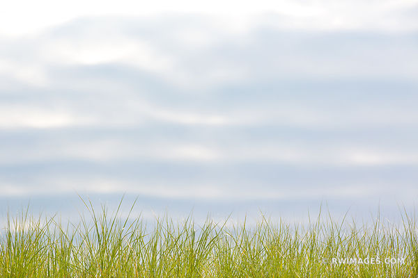 BEACH GRASSES NANTUCKET ISLAND COLOR
