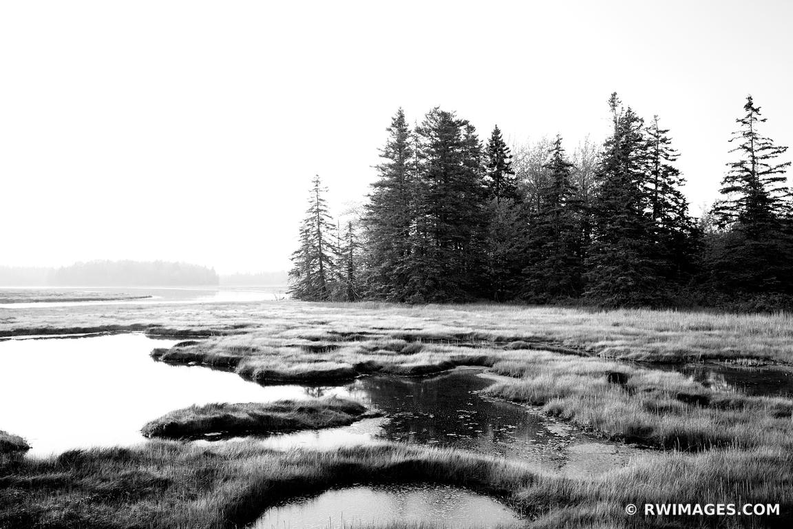 PRETTY MARSH AREA ACADIA NATIONAL PARK BLACK AND WHITE