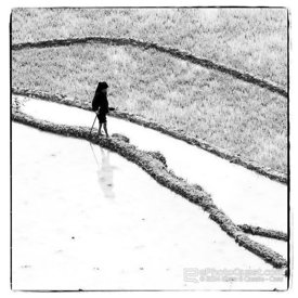 Villager Walking Along Edge of Rice Paddy with Relective Muddy Water