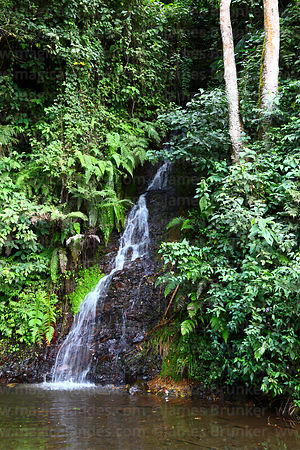 Waterfall and tropical cloud forest vegetation near Coroico, North Yungas province, Bolivia