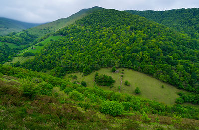 Forested  hillside in Tuneles de la Engana, Vega de Pas, Valles Pasiegos, Cantabria, Spain, Europe. May 2015.