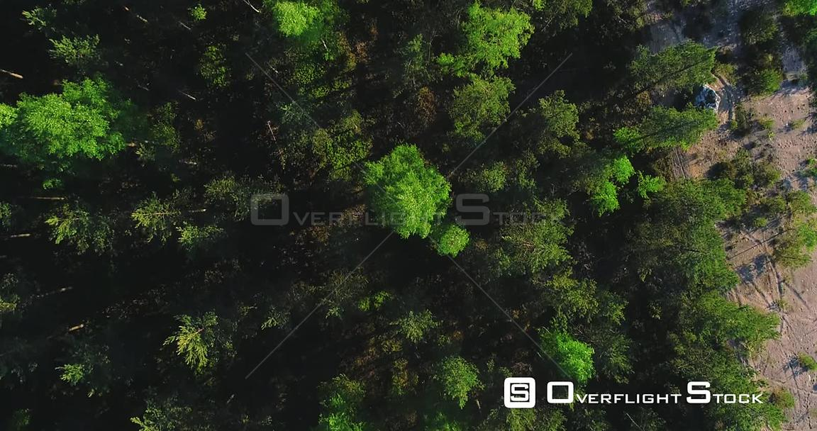 Spring Forest, Aerial, Top Down, Drone Shot, Over Light Green Finnish Woods and Scandinavian, Green Gold Trees, on a Sunny, S...