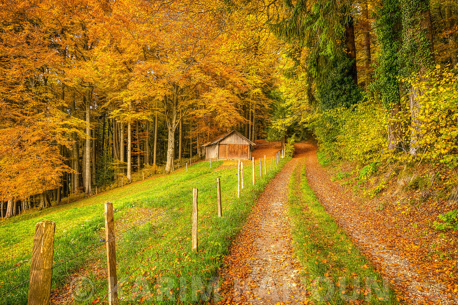 Autumn path to abandoned hut