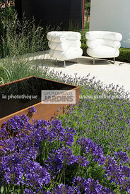 Terrasse contemporaine : Fauteuil Bibendum (collection Eileen Gray). Agapanthus africanus 'Tom Thumb', African lily. Paysagis...
