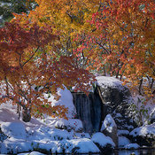 Nikka_Yuko_Fall_snow_DSC6641