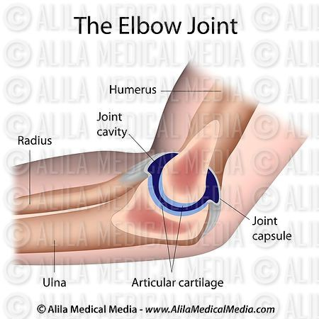 Elbow joint  labeled diagram.