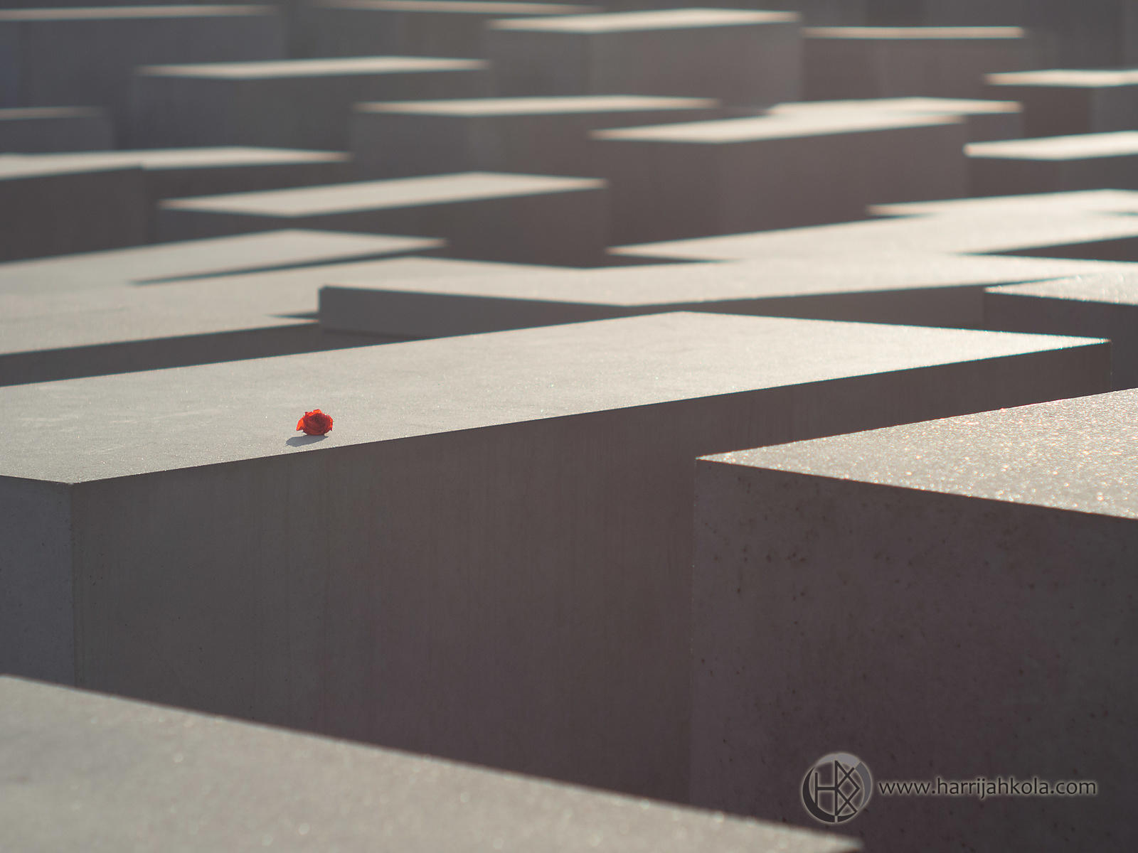 Germany - Berlin (Holocaust Memorial - Flower)