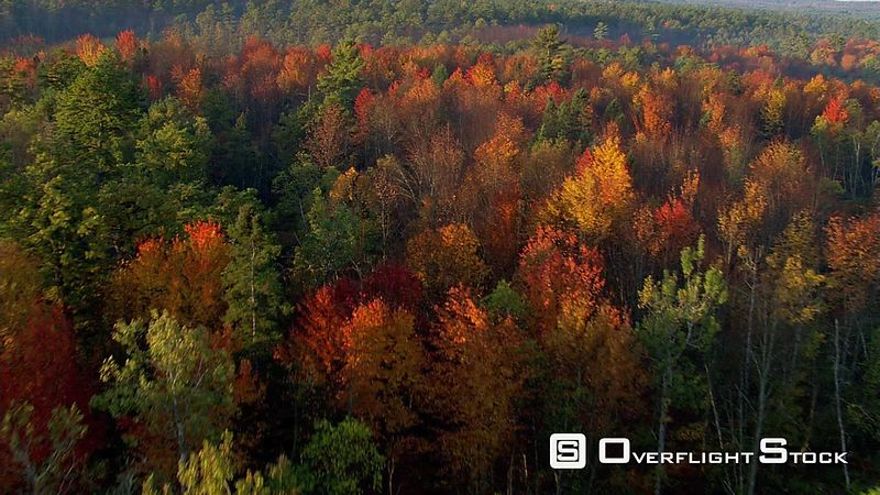 Flying over a mixed forest in fall colors