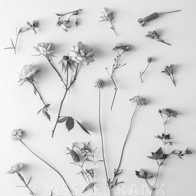Mixed flowers in black and white