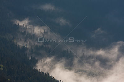 Clouds rising over forest on slopes of the Kouprova valley, Western Tatras, Carpathian Mountains, Slovakia, June 2009