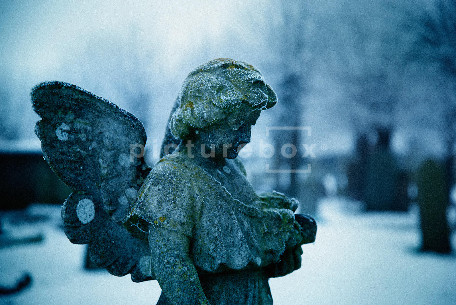 An atmospheric image of a frozen angel headstone in a church graveyard.