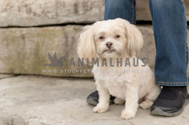 A small cream mutt sitting in front of it's owner on a stone terrace