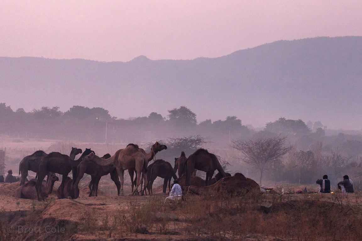 Dusk scene at the Pushkar Camel Mela, Pushkar, Rajasthan, India.