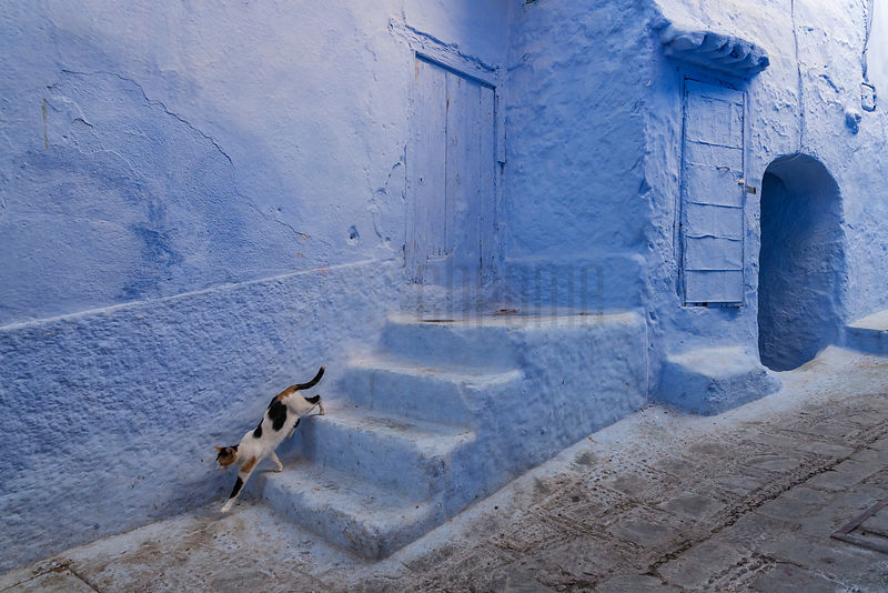 Calico Cat Running Down Blue Steps