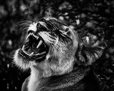 6971-Give_me_a_smile_Laurent_Baheux