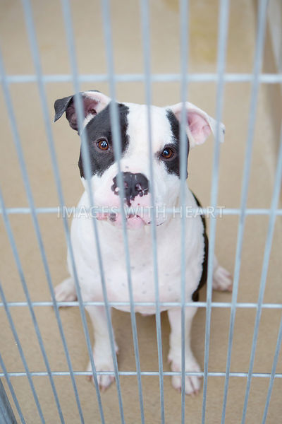 Black and white dog in animal shelter