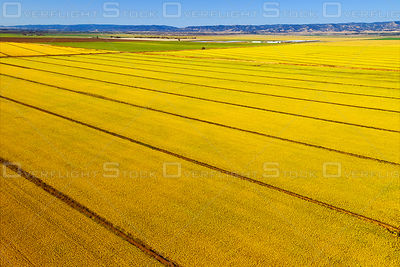 Sacramento Valley Agriculture, Near Woodland, California