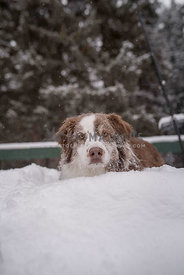 Dog Peeking Out From a Snowbank